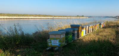 Miele di Barena, una bontà della Laguna Veneta