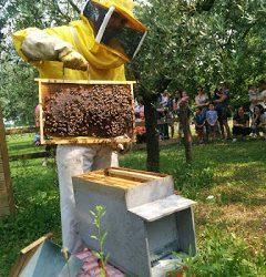 Cos'è il miele grezzo?