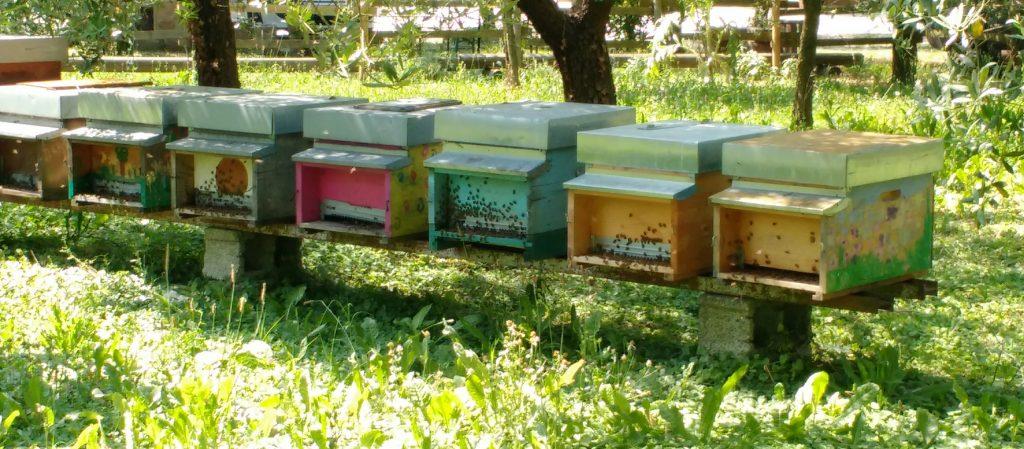 Le api bevono acqua in estate
